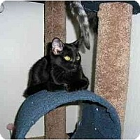Adopt A Pet :: Gabrielle - Scottsdale, AZ