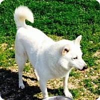 Adopt A Pet :: Sunny - Farmingtoon, MO