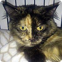 Adopt A Pet :: Squirrel - Calgary, AB