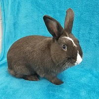 Other/Unknown Mix for adoption in Los Angeles, California - Cocoa Nibs