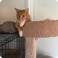 Adopt A Pet :: Champ - Alpharetta, GA