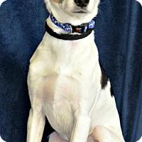 Adopt A Pet :: Buddy B. - Yreka, CA