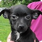 Adopt A Pet :: Baloo