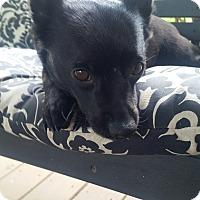 Adopt A Pet :: Fern - Houston, TX