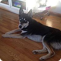 Adopt A Pet :: Toby - Alliance, NE