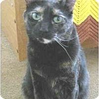 Adopt A Pet :: Persia and Snickers - Mesa, AZ