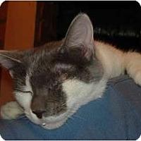 Adopt A Pet :: Sallie - Chesapeake, VA