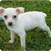 Adopt A Pet :: Isaiah - Plainfield, CT