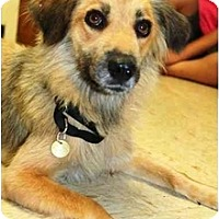 Adopt A Pet :: Mufin - Racine, WI