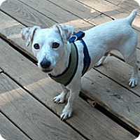 Adopt A Pet :: Digsby in Houston - Houston, TX