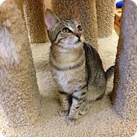 Adopt A Pet :: Electra - Lake Charles, LA