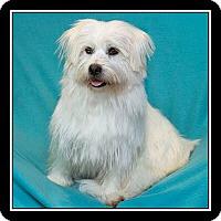 Adopt A Pet :: Puffy - West LA, CA