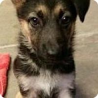 Adopt A Pet :: Lollie - Canoga Park, CA
