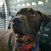 Adopt A Pet :: Pokie - Buckeystown, MD