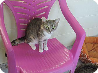 Domestic Shorthair Cat for adoption in Washington, Georgia - Chloe