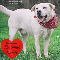 Labrador Retriever Mix Dog for adoption in San Leon, Texas - Noodle