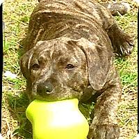 Adopt A Pet :: Janet - Bastrop, TX