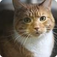 Adopt A Pet :: Nemo - West Des Moines, IA