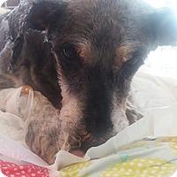 Adopt A Pet :: Jane - Oakton, VA