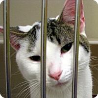 Adopt A Pet :: Franklin - Ludington, MI