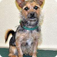 Adopt A Pet :: Hootie - Port Washington, NY