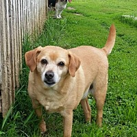 Adopt A Pet :: Ricky (Bonded Pair) - Laconia, IN