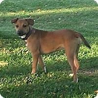 Adopt A Pet :: Athena - Albert Lea, MN
