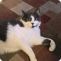 Adopt A Pet :: Pepper - Roseville, MN