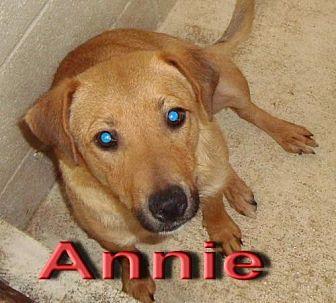 Terrier (Unknown Type, Medium) Mix Dog for adoption in Coleman, Texas - Annie