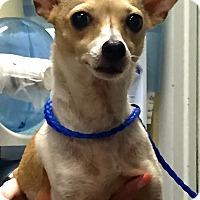 Adopt A Pet :: Ohla Guys!!! - Ft Myers Beach, FL