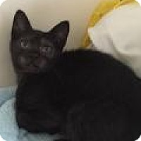 Adopt A Pet :: Puma - East Hanover, NJ