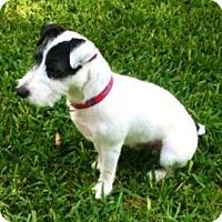 Adopt A Pet :: Ranger in Dallas - Austin, TX