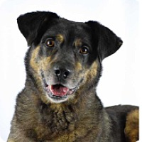 Husky Mix Dog for adoption in Walker, Louisiana - Kilo
