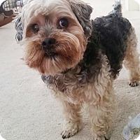 Adopt A Pet :: Leo - Lawrenceville, GA