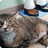 Adopt A Pet :: Meatball - Cody, WY