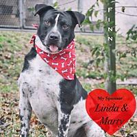 Blue Heeler Mix Dog for adoption in San Leon, Texas - Finn