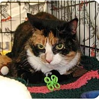 Polydactyl/Hemingway Cat for adoption in Clementon, New Jersey - Elle
