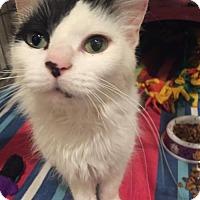 Adopt A Pet :: Chaka Khan - Cincinnati, OH