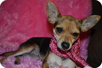 Chihuahua Dog for adoption in Cranford, New Jersey - Beth