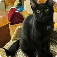 Adopt A Pet :: Eros - Rohrersville, MD