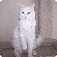 Adopt A Pet :: K-MaryG1-Natasha - Colorado Springs, CO