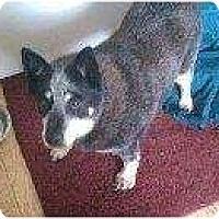 Adopt A Pet :: Felicia - Alliance, NE