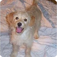 Adopt A Pet :: SHASTA - Rossford, OH