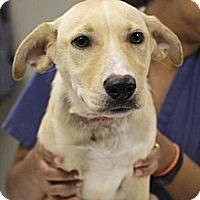 Adopt A Pet :: Hewey - Cumming, GA