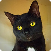 Adopt A Pet :: Cubby - Green Bay, WI