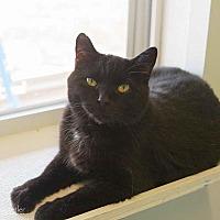 Adopt A Pet :: Binx - Estherville, IA