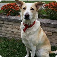 Collie Mix Dog for adoption in Wapakoneta, Ohio - Dixie