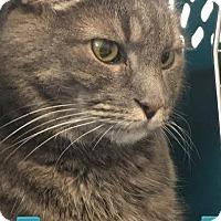 Adopt A Pet :: Grace - Douglas, WY