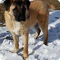 Adopt A Pet :: Susie - Macomb, IL