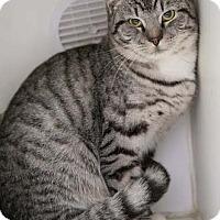 Adopt A Pet :: Jordy - Merrifield, VA